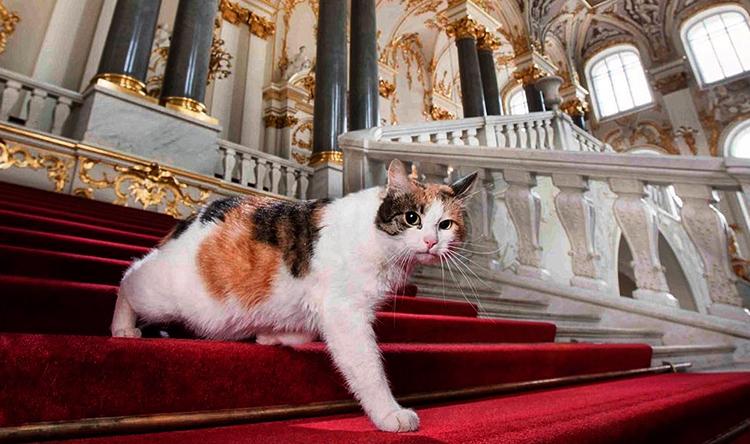 Кошка в Эрмитаже