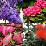 10 самых красивых растений в мире