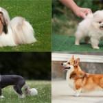 Самые красивые маленькие породы собак