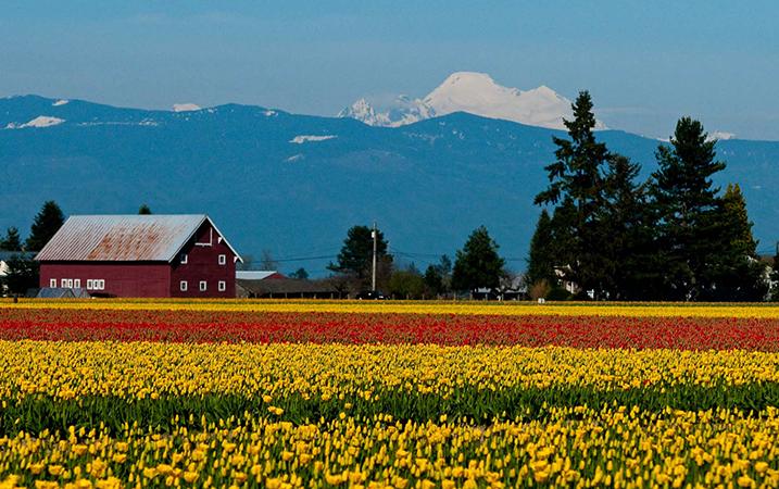 Долина Скагит, штат Вашингтон