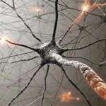 Самые интересные факты о нервной системе