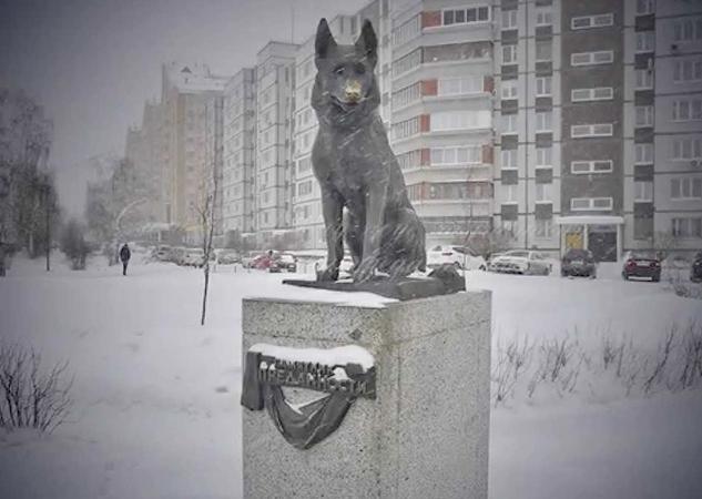 Памятник овчарке в Тольятти