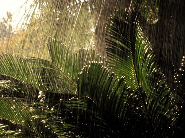 Папоротник под дождем
