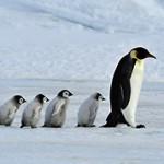 Интересные и необычные факты о пингвинах