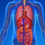 Самые интересные факты о человеческом организме