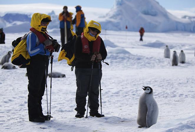 Туристы в Антарктиде