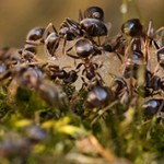 Самые интересные факты о муравьях