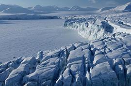 arcticava