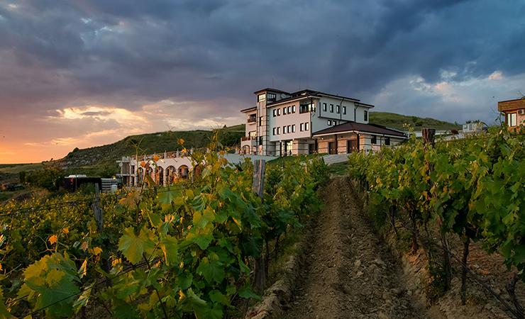Виноградники в Болгарии
