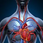 Самые интересные факты о крови и кровеносной системе человека