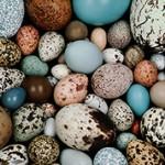 Интересные и удивительные факты о яйцах