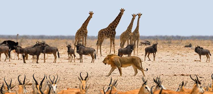 Национальный парк Этоша, Намибия