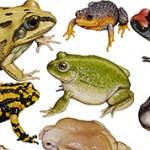Интересные и удивительные факты о лягушках