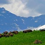 Интересные факты о Кавказском заповеднике