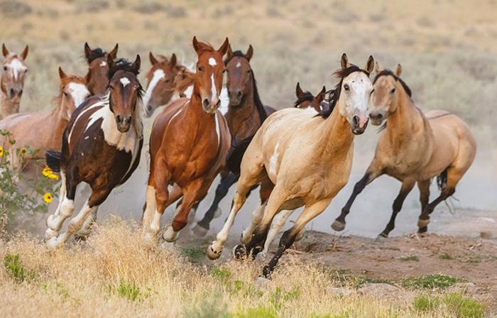 Лошади гуляют