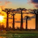 Мадагаскар — интересные факты о стране