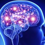 Самые интересные и удивительные факты о мозге человека