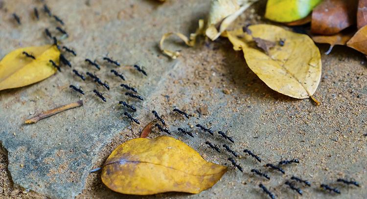 Путь из муравьев