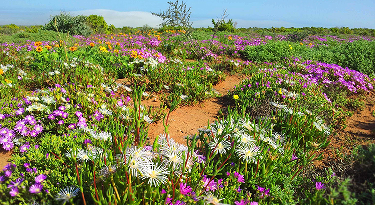 Намакваленд, ЮАР