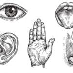 Интересные факты о органах чувств