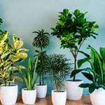 Самые интересные факты о комнатных растениях