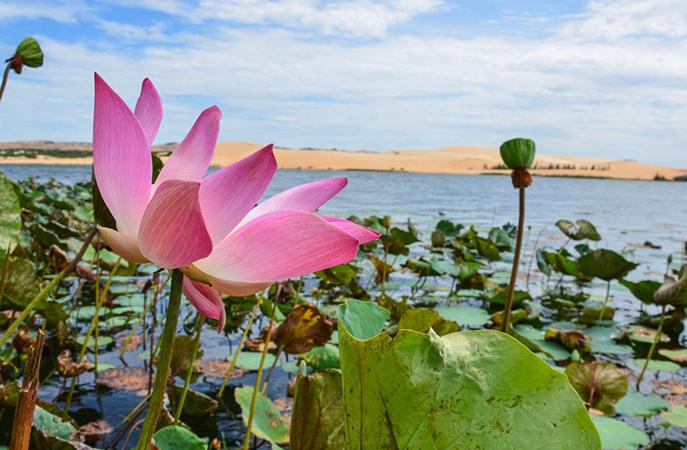 Озеро лотосов и Белые дюны