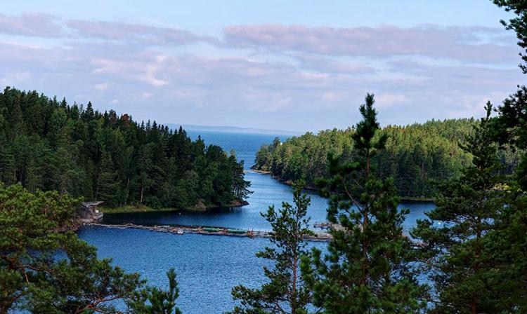 Ладожское озеро и лес