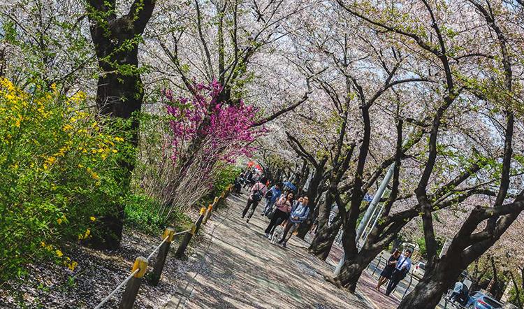 Парк Йоидо (Yeouido Park)