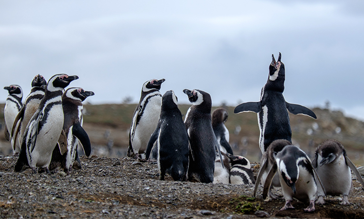 Пингвины на острове