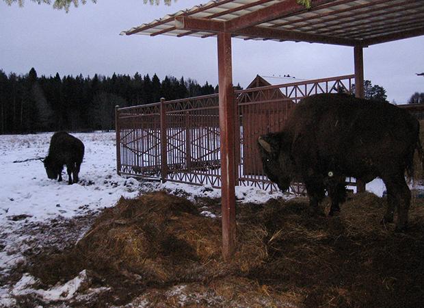 Питомник поселка Токсово