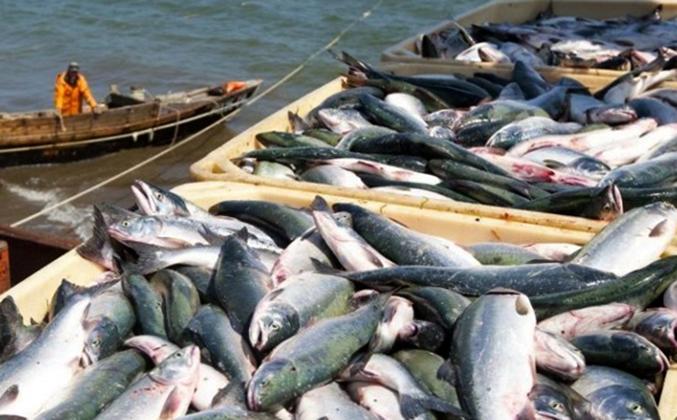 Рыболовство на Сахалине