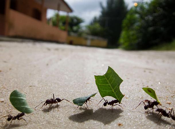 Сила муравьев