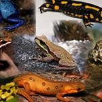 Самые интересные факты о земноводных