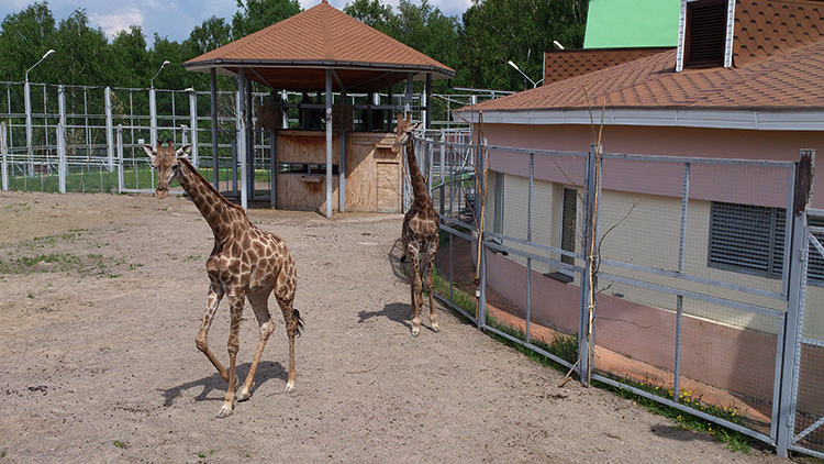 Зоопарк «Роев ручей»