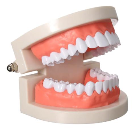 28 зубов