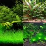 Самые красивые аквариумные растения