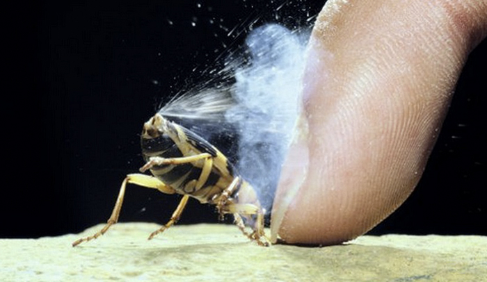 Атака жука