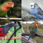 Самые красивые виды попугаев