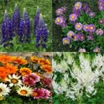 10 самых красивых цветов для сада