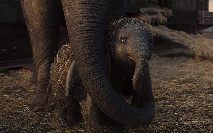 Слоненок из фильма Дамбо