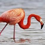 Интересные и удивительные факты о фламинго