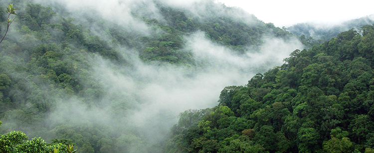 Лес Коста-Рики