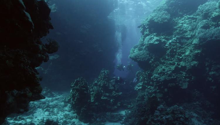 На глубине Красного моря