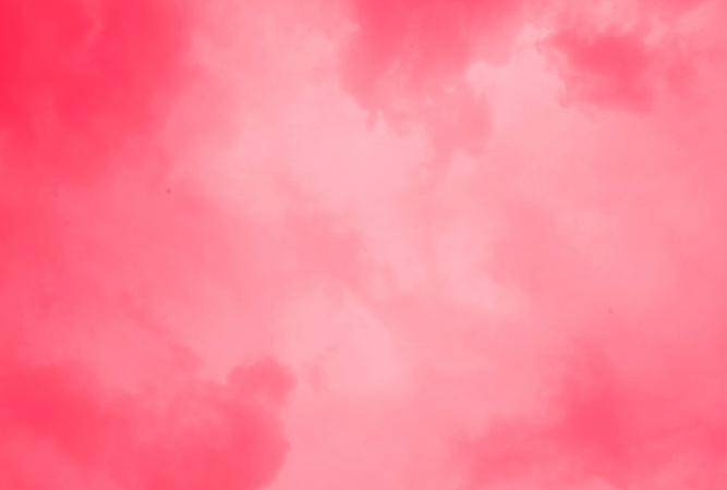 Красивый розовый цвет