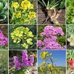 Интересные данные и факты о крестоцветных растениях
