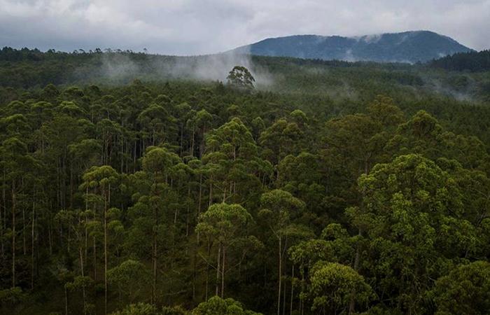 Лес в Индонезии