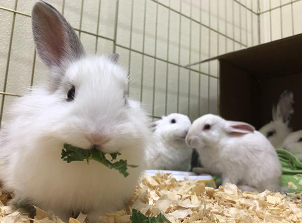 Милый кролики