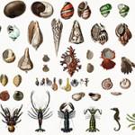 Самые интересные факты про моллюсков