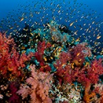 Интересные факты о Красном море