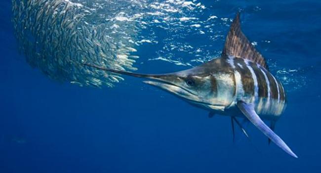 Обитание рыбы